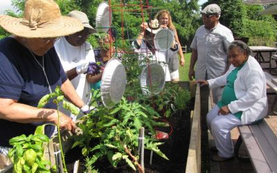 Active Adult Community:  The Culture of Community Gardening